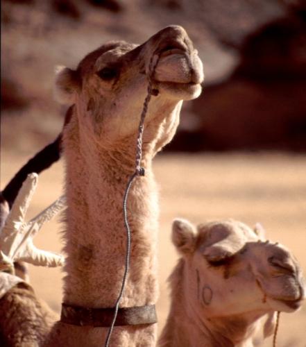 Libya - Sahara desert 126
