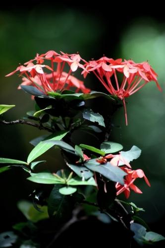 Sri Lanka 041 - Spice garden
