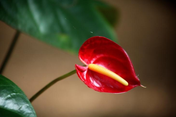 Sri Lanka 042 - Spice garden