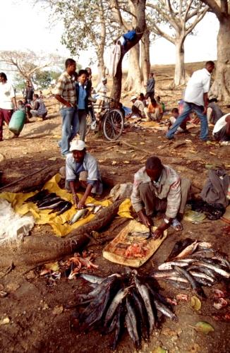 Ethiopia - South 005 - Awasa