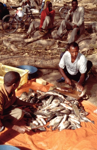 Ethiopia - South 018 - Awasa