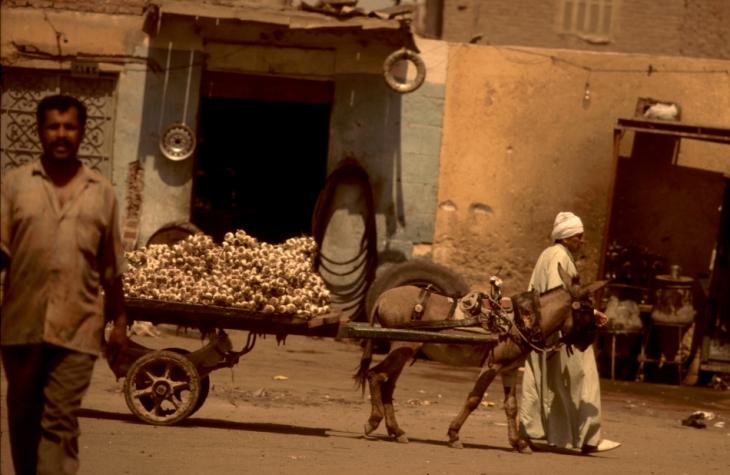 Egypt - Cairo 072