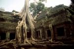 Cambodia - Angkor 049 - Ta Phrom
