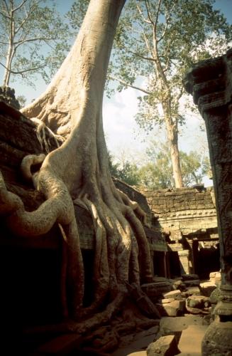 Cambodia - Angkor 050 - Ta Phrom