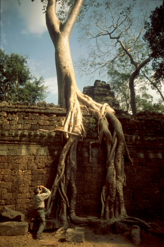 Cambodia - Angkor 051 - Ta Phrom