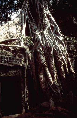 Cambodia - Angkor 054 - Ta Phrom