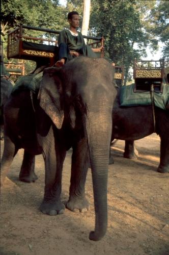 Cambodia - Angkor 097