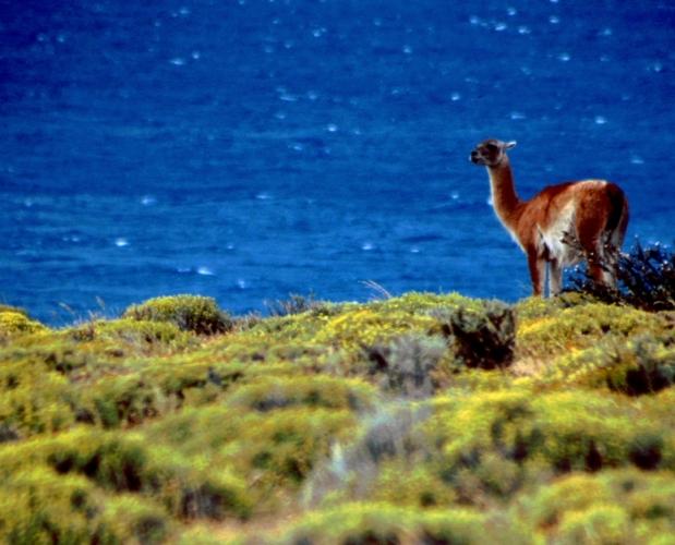 Chile - Torres del Paine 02