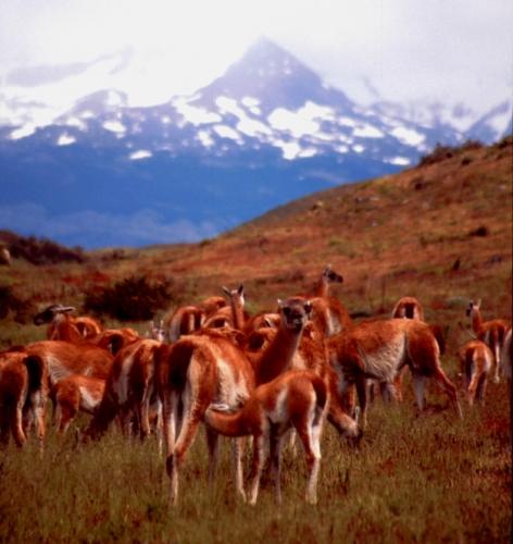 Chile - Torres del Paine 06