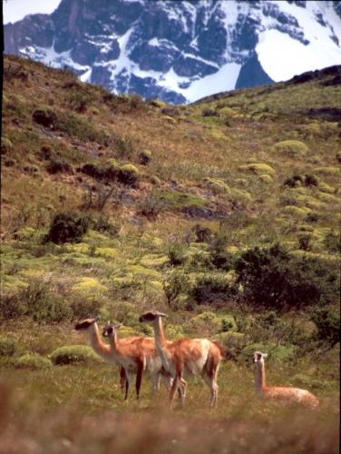 Chile - Torres del Paine 11