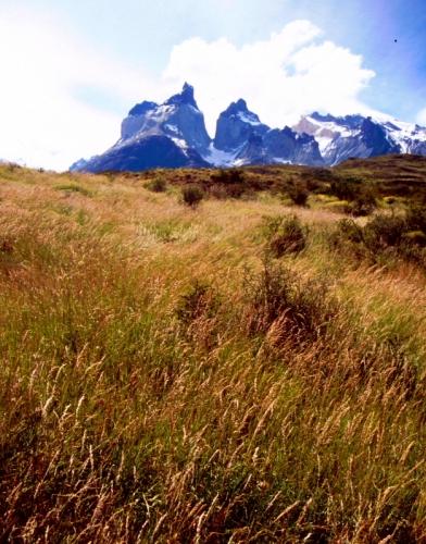Chile - Torres del Paine 13