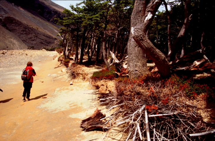 Chile - Torres del Paine 65