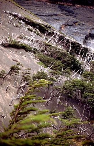 Chile - Torres del Paine 68
