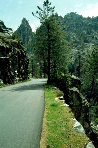 France - Corsica 092 - Restonica Valley