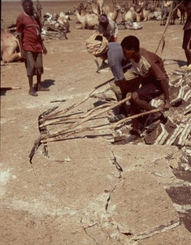 Ethiopia - Danakil 115 - Asale