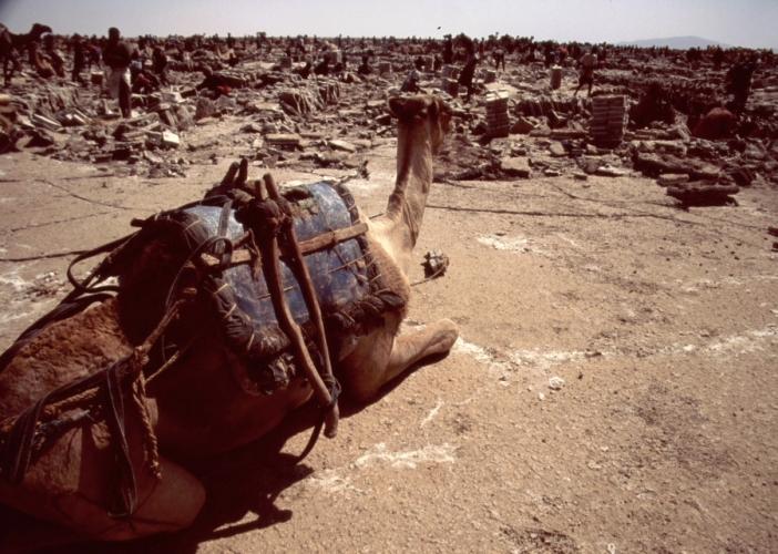 Ethiopia - Danakil 125 - Asale