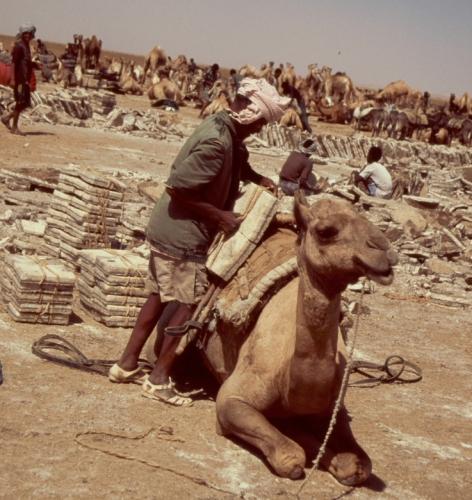 Ethiopia - Danakil 127 - Asale