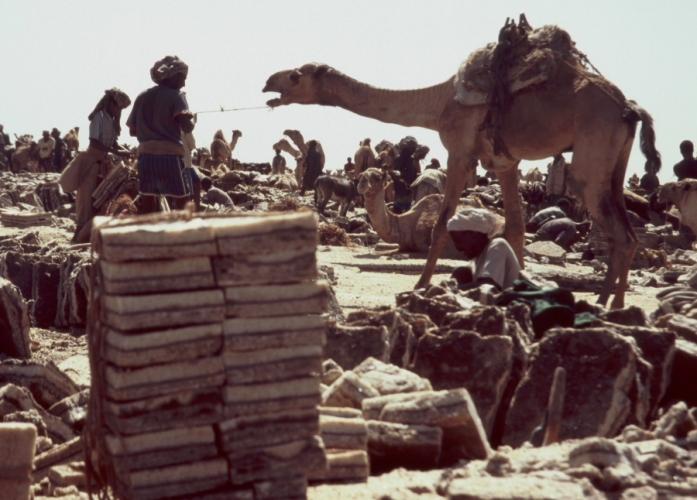 Ethiopia - Danakil 128 - Asale