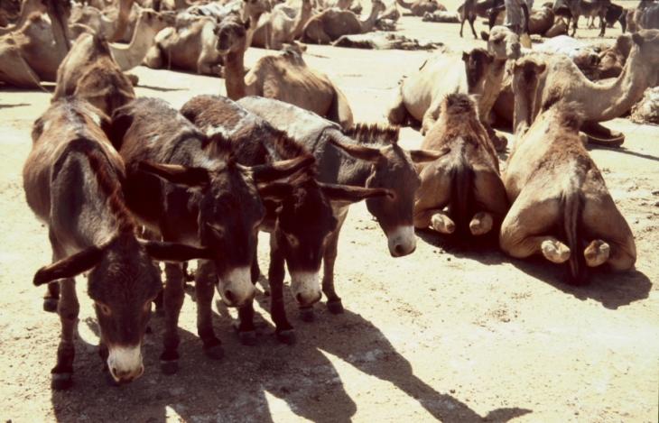 Ethiopia - Danakil 129 - Asale