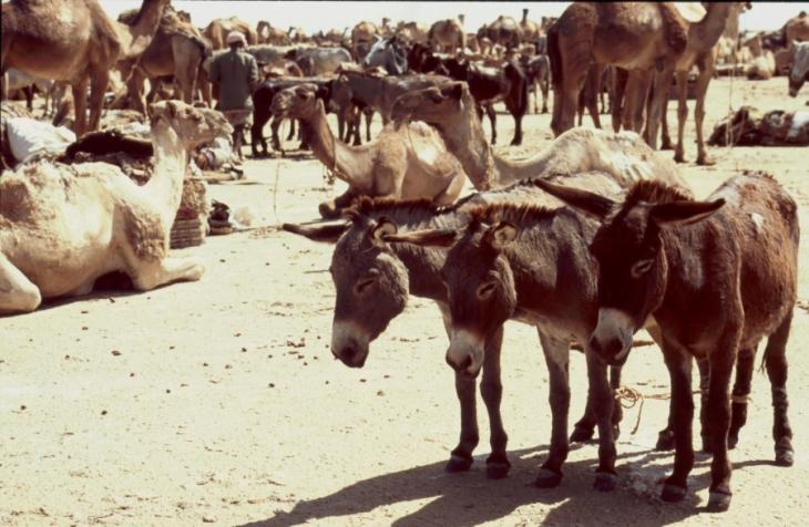Ethiopia - Danakil 132 - Asale