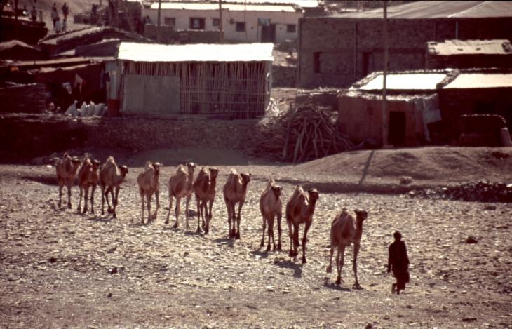 Ethiopia - Danakil 032 - Berahile