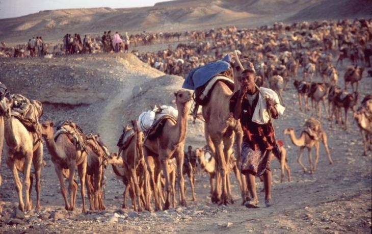 Ethiopia - Danakil 033 - Hamadela