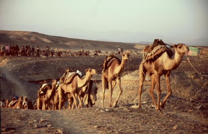 Ethiopia - Danakil 034 - Hamadela