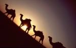 Ethiopia - Danakil 036 - Hamadela