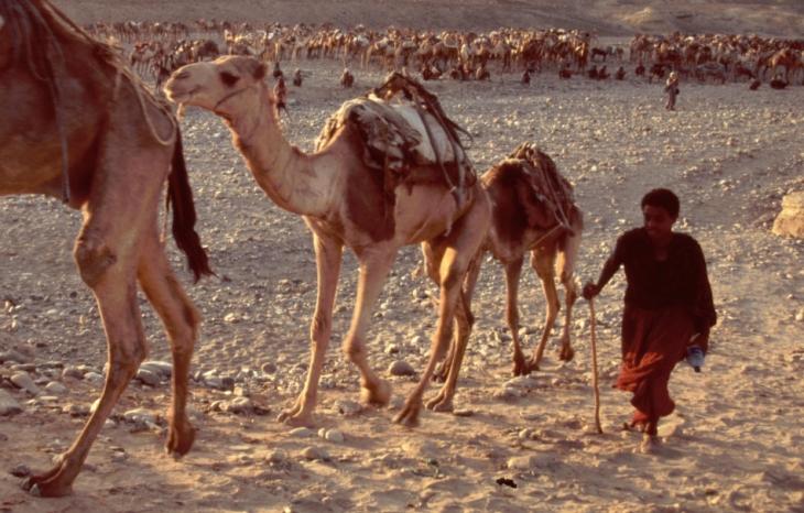 Ethiopia - Danakil 038 - Hamadela