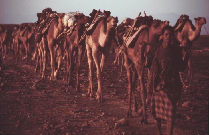 Ethiopia - Danakil 041 - Hamadela