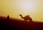 Ethiopia - Danakil 045 - Hamadela