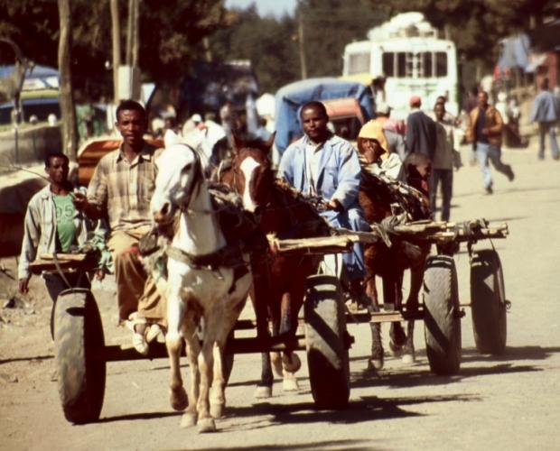 Ethiopia 094 - Debark