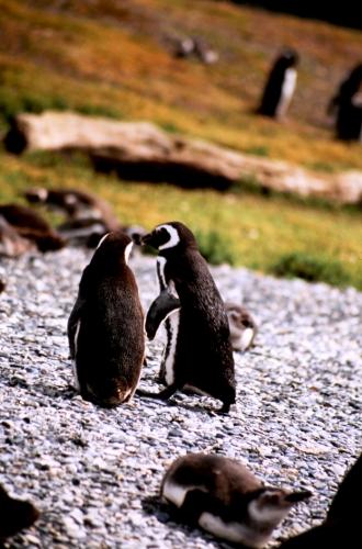 Argentina - Tierra Del Fuego 046