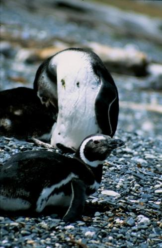 Argentina - Tierra Del Fuego 047