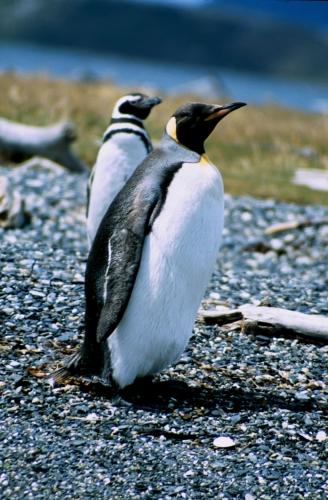 Argentina - Tierra Del Fuego 049