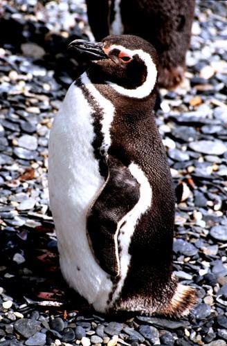 Argentina - Tierra Del Fuego 050