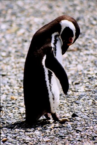 Argentina - Tierra Del Fuego 051