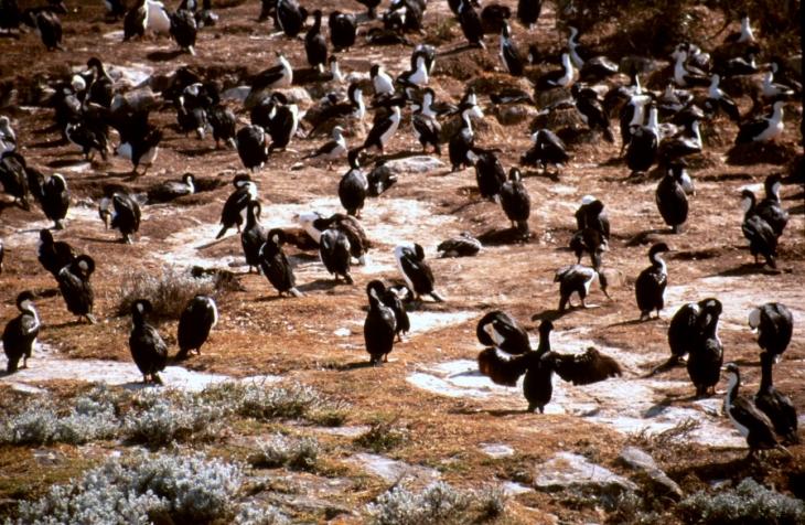 Argentina - Tierra Del Fuego 057