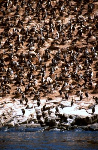 Argentina - Tierra Del Fuego 058