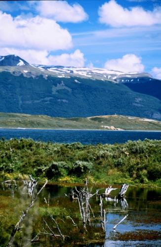 Argentina - Tierra Del Fuego 025