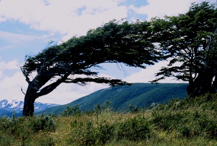 Argentina - Tierra Del Fuego 027