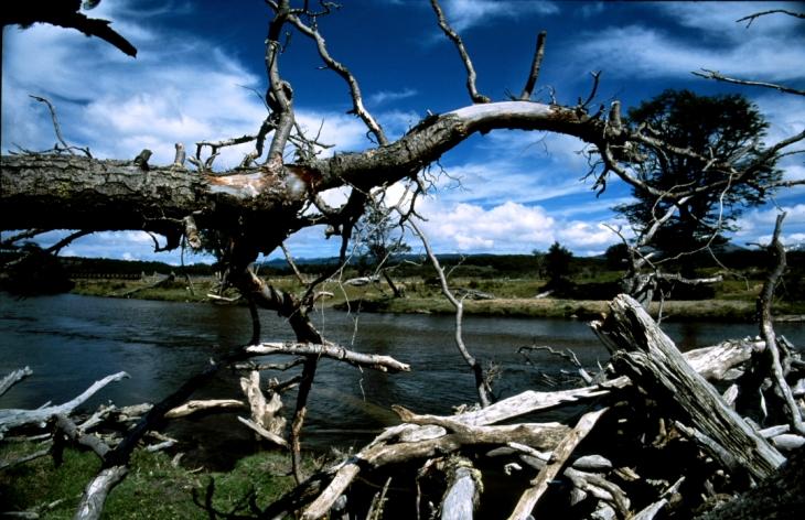 Argentina - Tierra Del Fuego 031