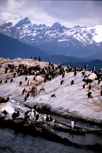 Argentina - Tierra Del Fuego 054