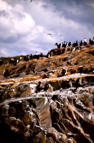 Argentina - Tierra Del Fuego 059
