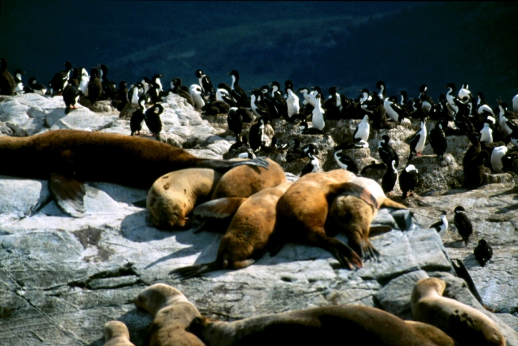 Argentina - Tierra Del Fuego 064