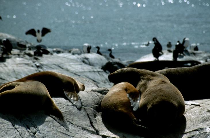 Argentina - Tierra Del Fuego 065