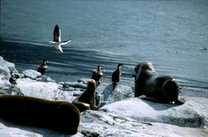 Argentina - Tierra Del Fuego 066