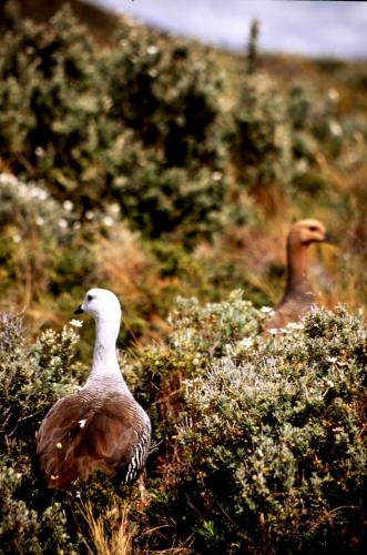 Argentina - Tierra Del Fuego 070