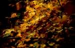 Greece - Autumn Sonata 36 - Frakto