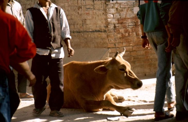 Nepal - Bodnath 01